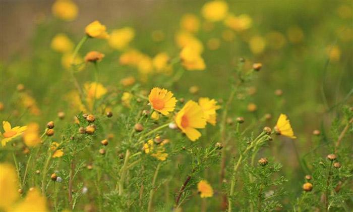 la Flora nelle saline